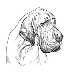 great dane hand drawing portrait vector image