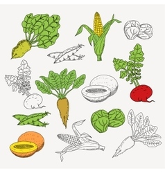 Hand drawn vegetarian food set on white background vector image
