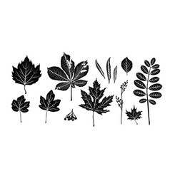 isolated black leaves vector image
