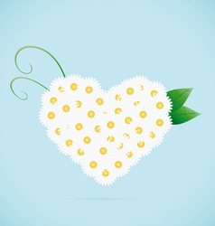 Chamomile heart vector image