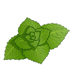 Sprig of mint vector