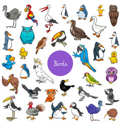 Cartoon birds animal characters big set vector
