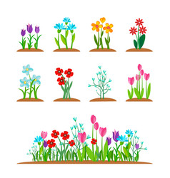 early spring garden blossom flowers grass vector image