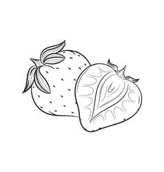 Hand drawn Strawberry sketches vector image