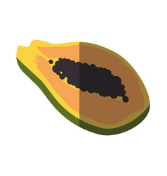 Papaya sweet fruit vector