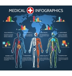 Human Body Anatomy Infographic vector image vector image