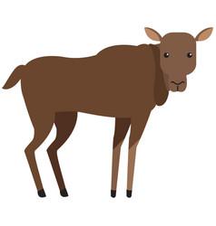 Deer animal cartoon vector