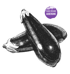 Hand drawn aubergine vector