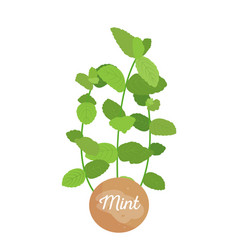 mint herb logotype with round label potted mints vector image
