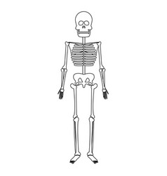 Skeleton human bones skull medicine line vector
