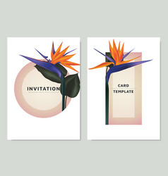 bird paradise flowers and leaves vector image