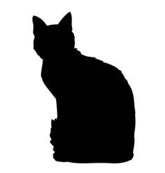 cute cat sitting i of black vector image