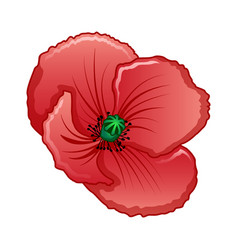 Poppy icon cartoon style vector