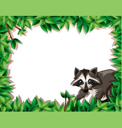 raccoon on nature frame vector image