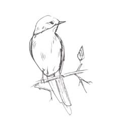 Bird pencil grey sketch vector image