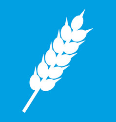 dried wheat ear icon white vector image vector image