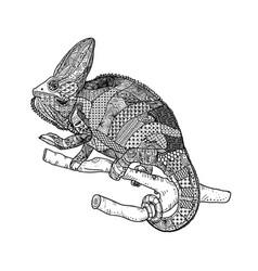 chamelion vector image