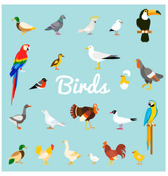 A set of domestic and wild birds in a flat style vector