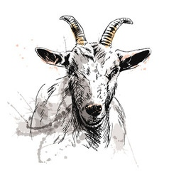 Colored hand sketch of goat head vector