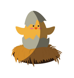 little chicken cartoon vector image
