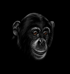 Portrait of a chimpanzee head on a black vector