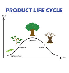 Product life cycle on white background vector