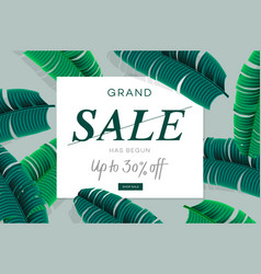sale banner web template with palm leaves jungle vector image