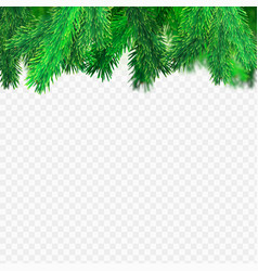 spruce transparent background vector image