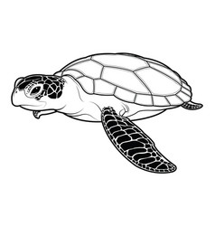 sea turtle animal cartoon on white background vector image vector image
