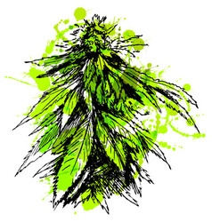 Colored hand sketch of marijuana vector