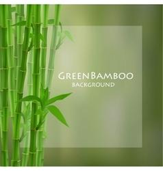 Green bamboo vector