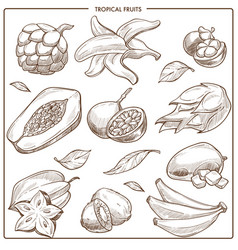 Tropical exotic sketch fruits vector