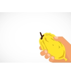 Hand holding a citron Etrog in Hebrew vector image
