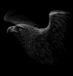 A hawk black-and-white graphic portrait vector