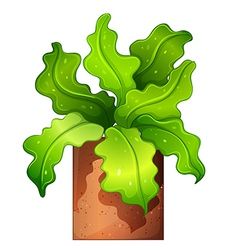 A houseplant in a pot vector image