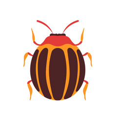 Colorado beetle insect bug top view flat vector