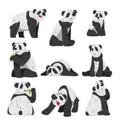 cute funny panda bear adorable wild animals in vector image