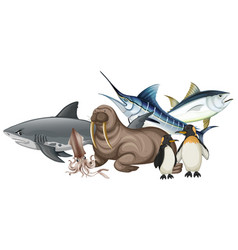 Different types of sea animals on white vector