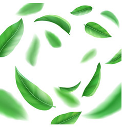 realistic fresh green leaves on white background vector image