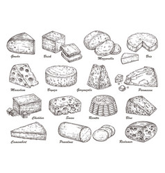 sketch cheese hand drawn product holland tasty vector image