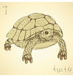 Sketch fancy turtle in vintage style vector image