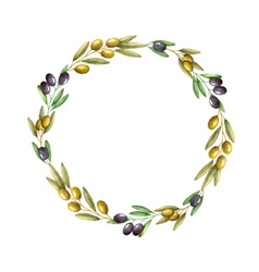 Watercolor olive branch wreath vector image