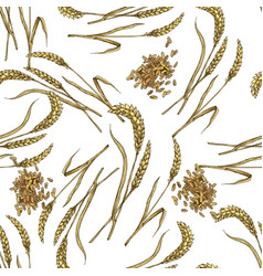 Wheat with grain seamless botanical pattern vector
