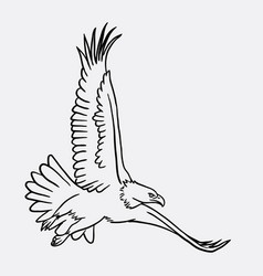Eagle bird flying sketch vector