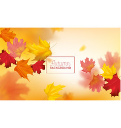 autumn background with red and yellow maple leaves vector image