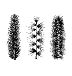 Hand drawn set fir branch pine isolated vector