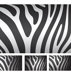 zebra skin backgrounds vector image vector image