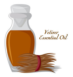 Vetiver essential oil vector