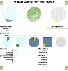 Watermelon nutrient information vector