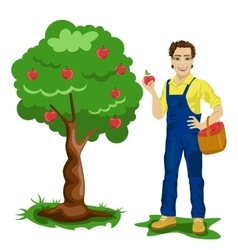 Young man picking apples in an orchard vector